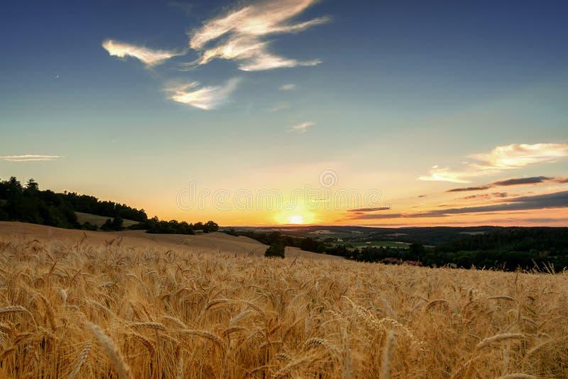 Поле зерна принятое на заход солнца стоковые изображения rf