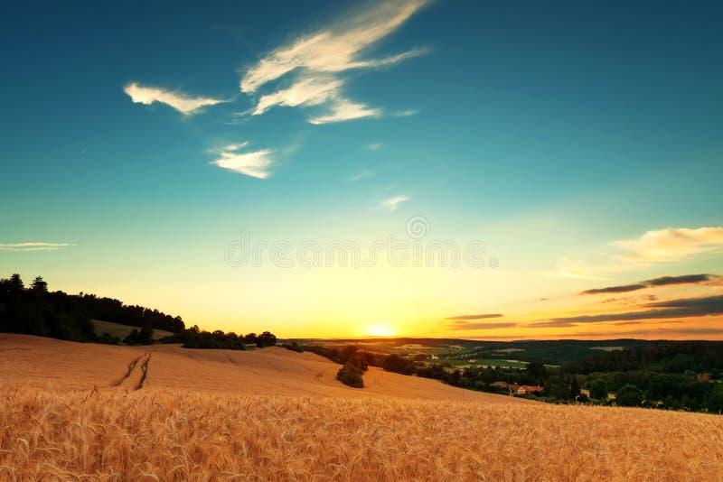 Поле зерна с небольшой деревней на заднем плане стоковые фото
