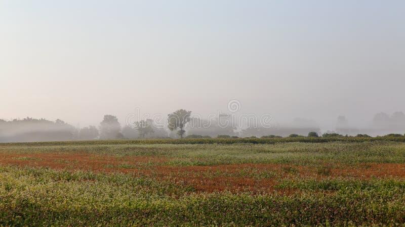 Поле и деревья фермы в тумане на зоре стоковые изображения