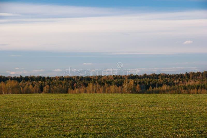 Абстрактная естественная предпосылка Поле и лес весны стоковое фото rf
