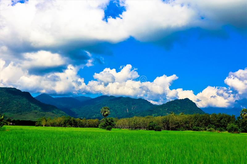 Поле и небо риса стоковое фото rf