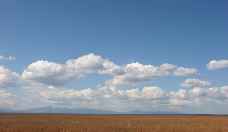 Поле и небо травы стоковое фото rf