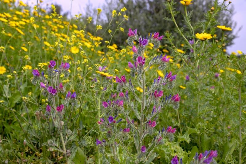 Поле красочных цветков во время цвести весны стоковое изображение rf