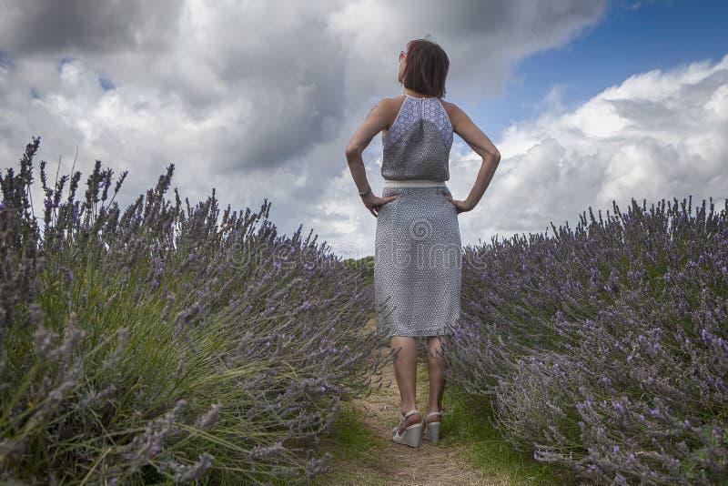 Поле лаванды на ферме лаванды Mayfield на Суррей опускает Девушка в красивом платье от назад к полю стоковое изображение