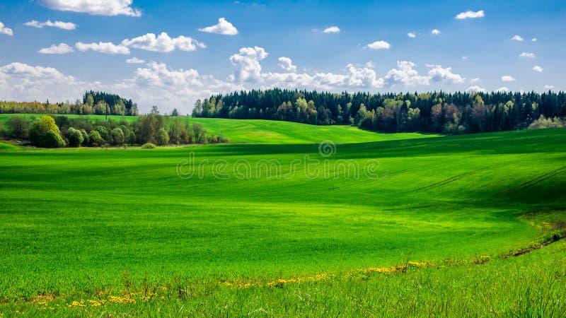 поле лета аграрное холмистое покрытое с зеленой травой под голубым облачным небом стоковое фото rf