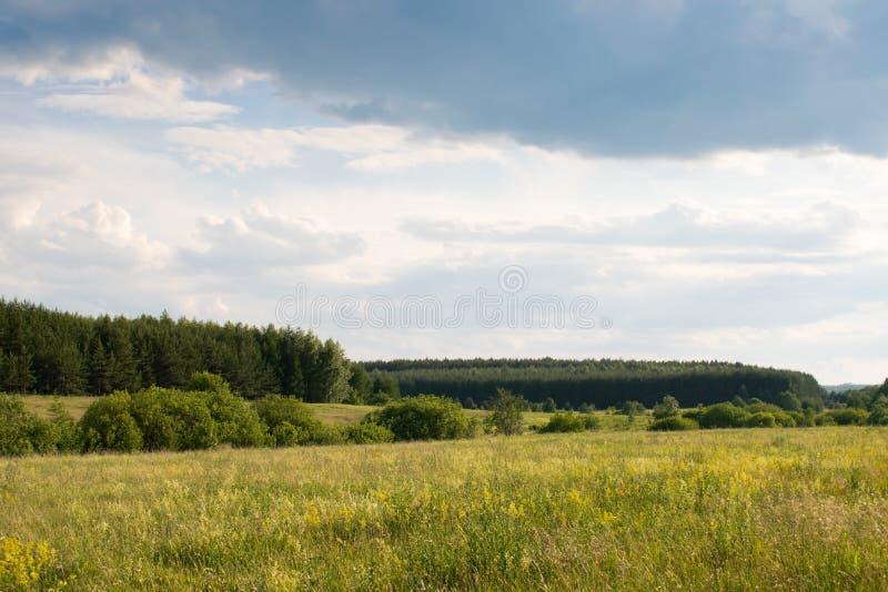Поле лета желтое и зеленое, голубое солнечное небо для предпосылки стоковое изображение rf