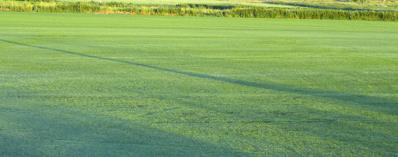 Поле на котором лужайка крена растется стоковая фотография rf