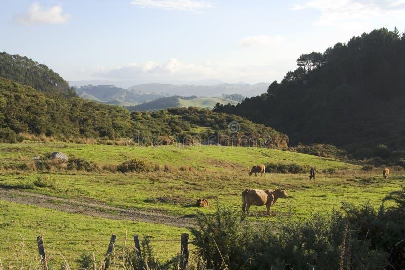 поле Новая Зеландия стоковое фото rf