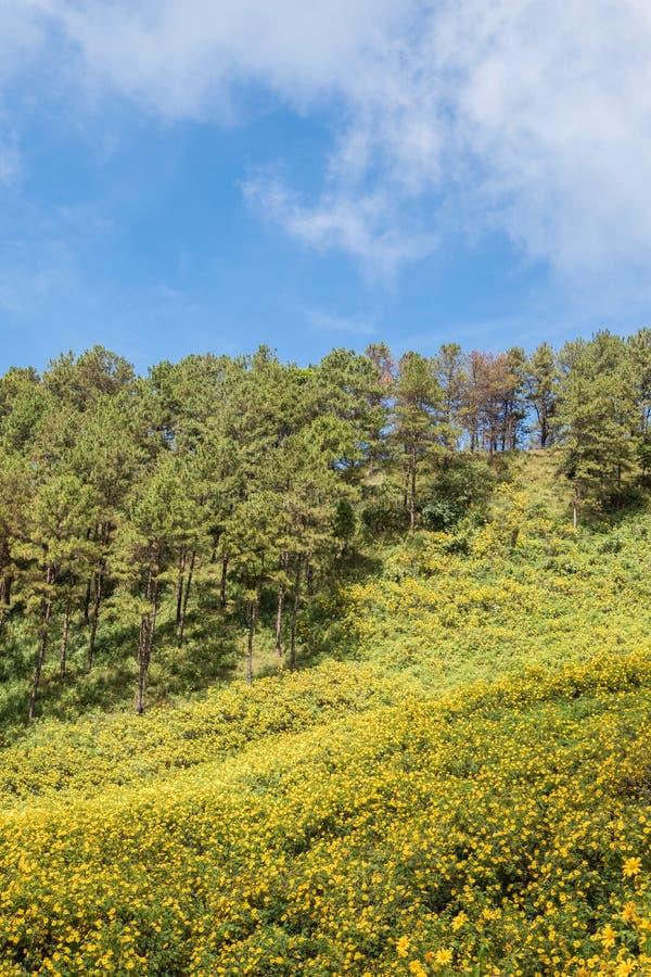 Поле ноготк дерева зацветает на высокой горе стоковые изображения