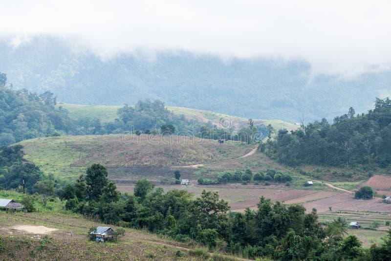Поле плантации местного фермера стоковое изображение