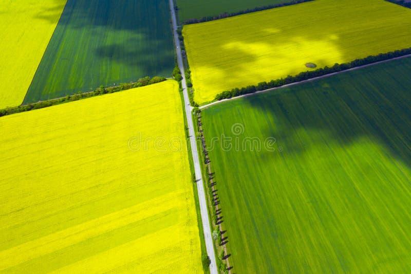 Поле рапса вида с воздуха желтое зацветая стоковое изображение rf
