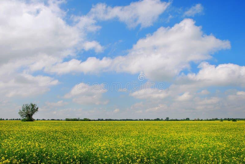 Поле рапса, красивого ландшафта стоковое изображение