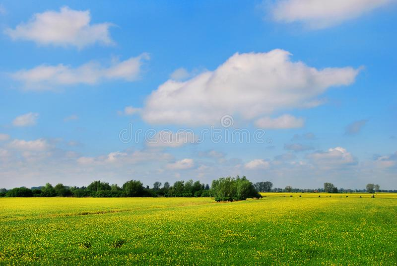 Поле рапса, красивого ландшафта стоковые фото