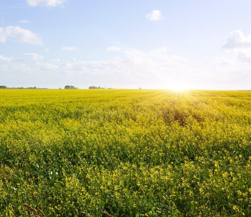 поле рассвета стоковая фотография