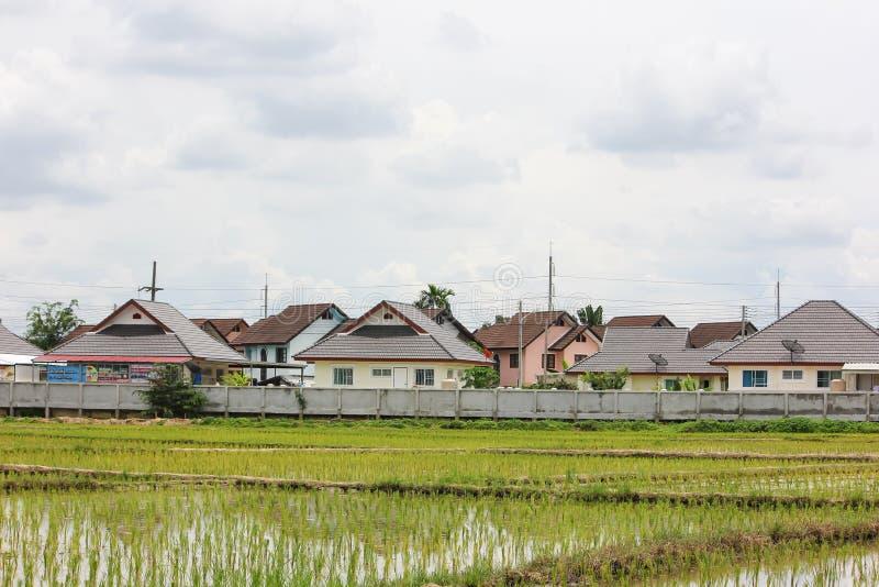 Поле риса около жилого массива стоковые фото