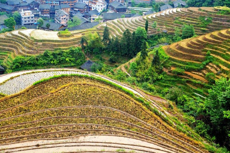 Поле риса террасы Longji стоковое фото rf