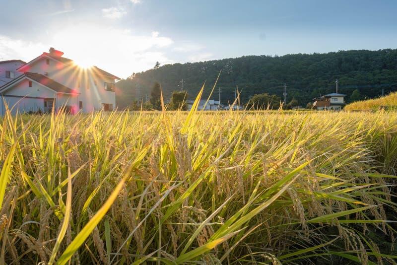 Поле рисовых полей в городе Hokuto, Японии стоковое изображение