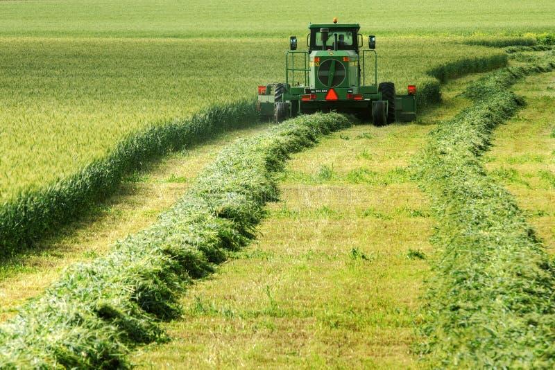 поле сельское стоковое фото rf