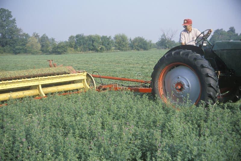 Поле сена вырезывания хуторянина стоковое изображение