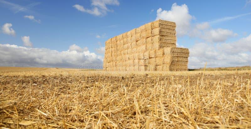 поле сжало сено стоковое изображение rf