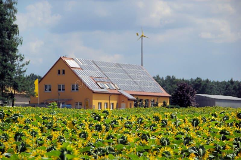 Поле солнцецвета и солнечный завод стоковые фотографии rf