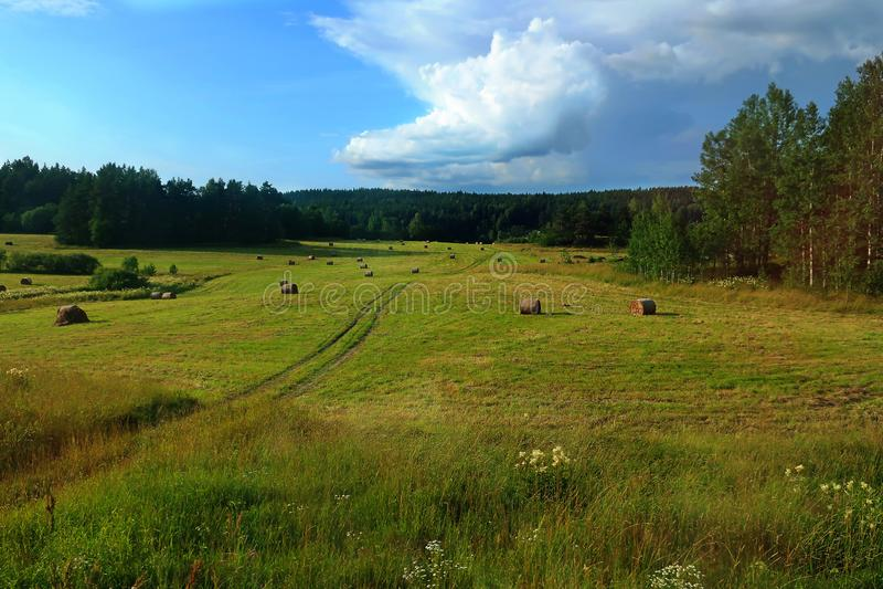 Поле со связками сена стоковые фото
