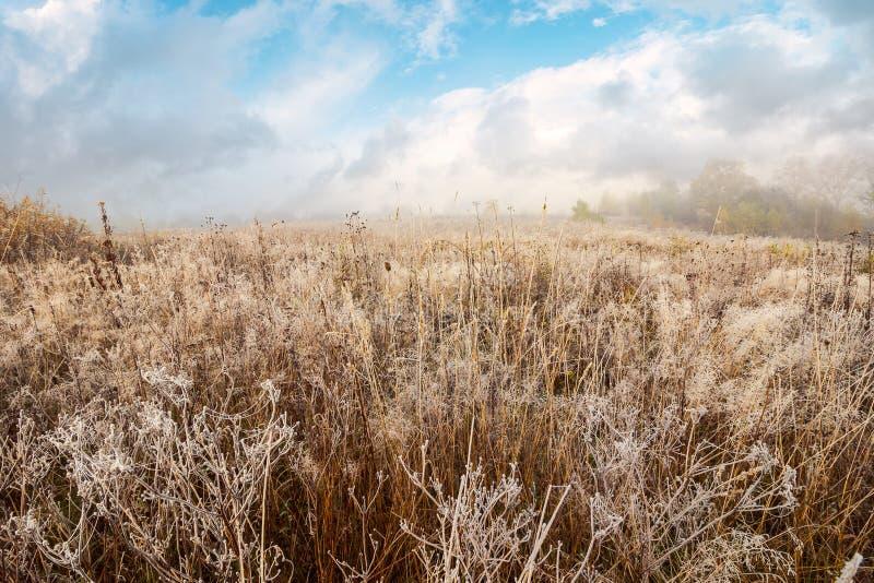 Поле с замороженной сухой травой стоковые изображения