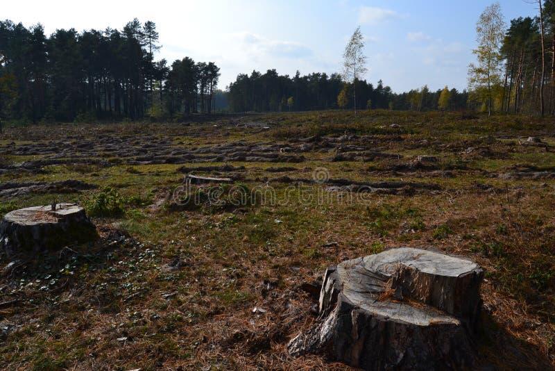 Поле с пнями около леса стоковое изображение rf
