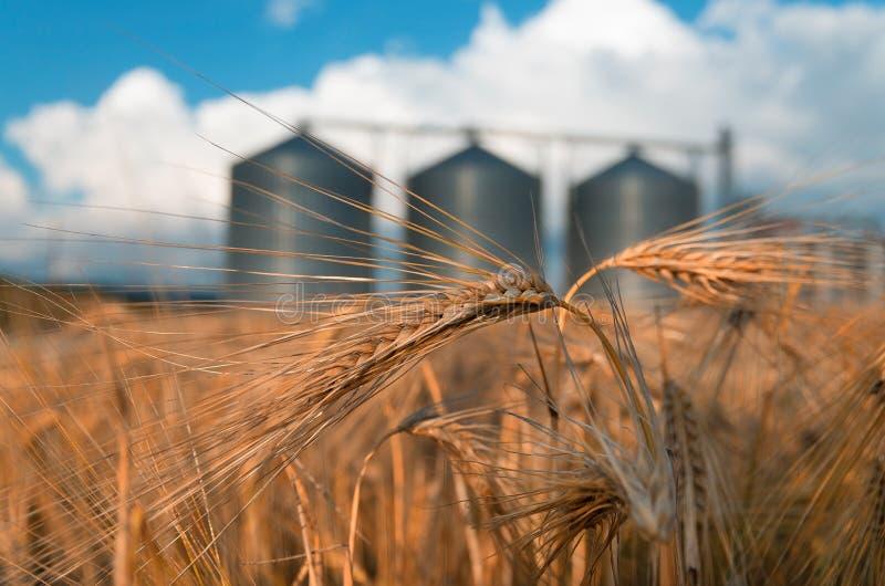 Поле с силосохранилищами зерна для земледелия стоковая фотография rf