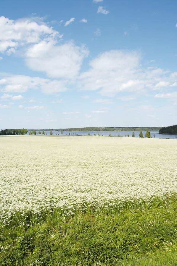 поле тимона стоковое фото rf