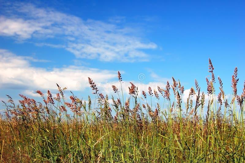 Поле, трава. стоковые изображения