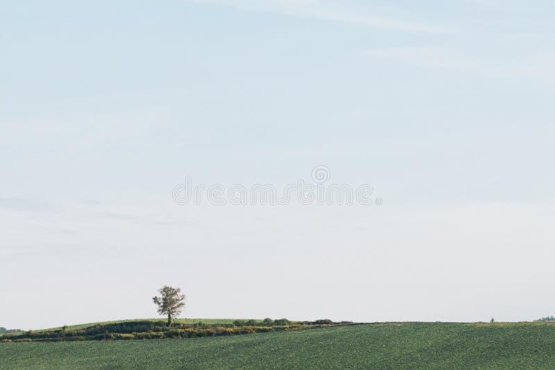 Поле травы природы ландшафта и одно дерево на голубом небе стоковая фотография rf
