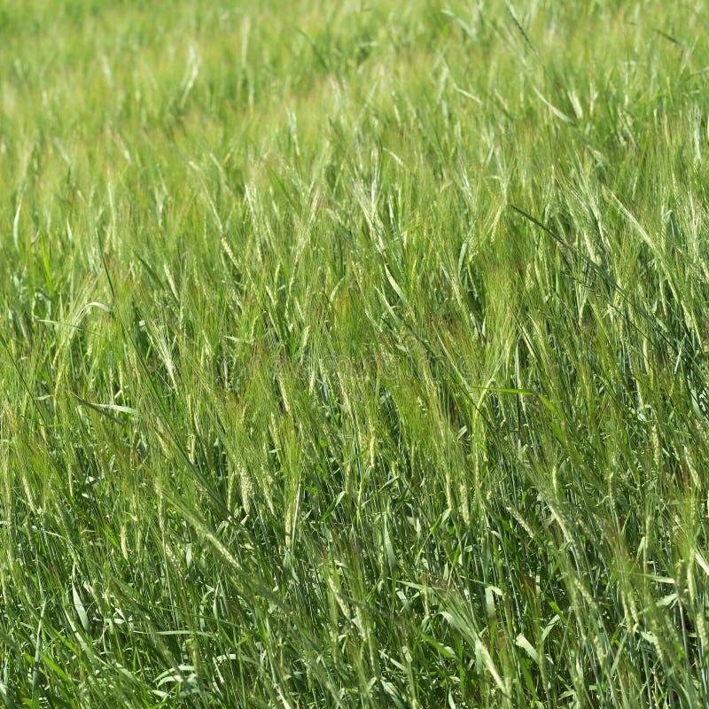 Поле травы стоковые фото
