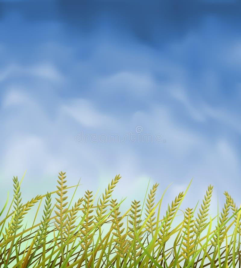 поле урожаев одичалое иллюстрация вектора