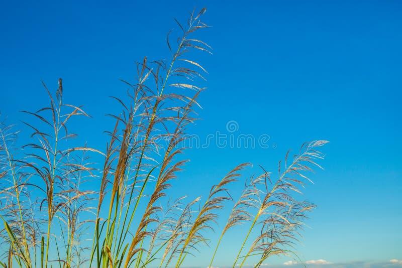 Поле, ферма, заход солнца, Солнце, небо стоковое изображение