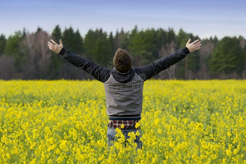 поле цветет желтый цвет человека стоковое фото