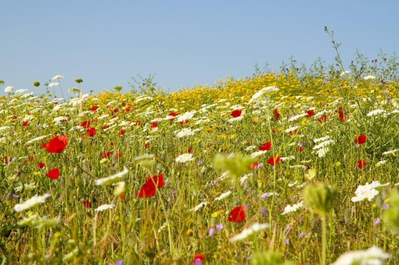 поле цветет смешанное одичалое стоковая фотография