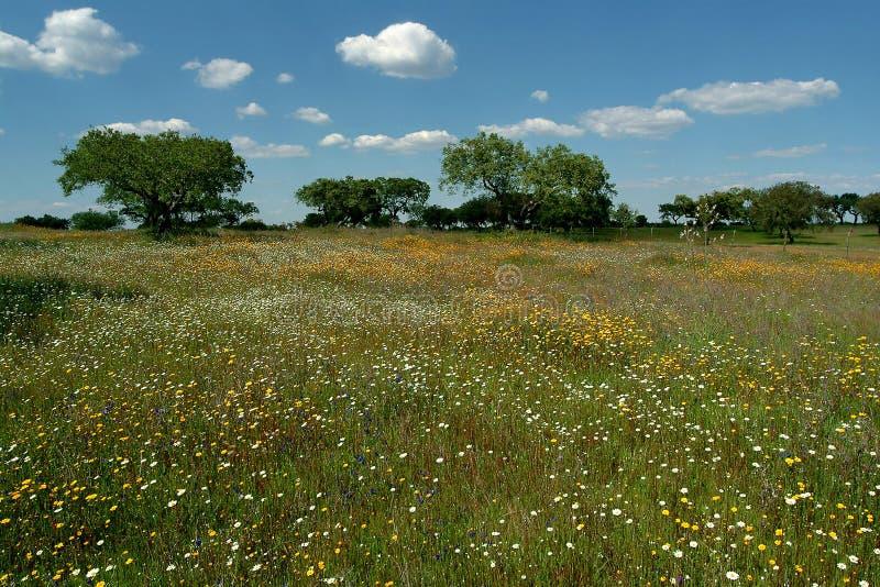 Download поле цветистое стоковое изображение. изображение насчитывающей природа - 495217