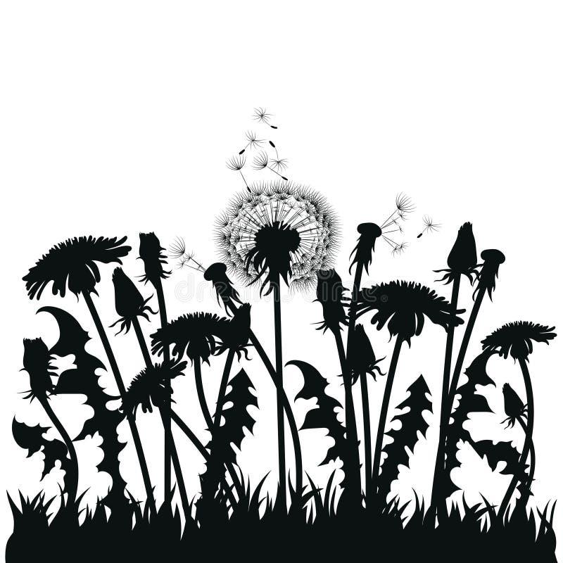 Поле цветков одуванчика Черные силуэты заводов лета на белой предпосылке План glade с бесплатная иллюстрация