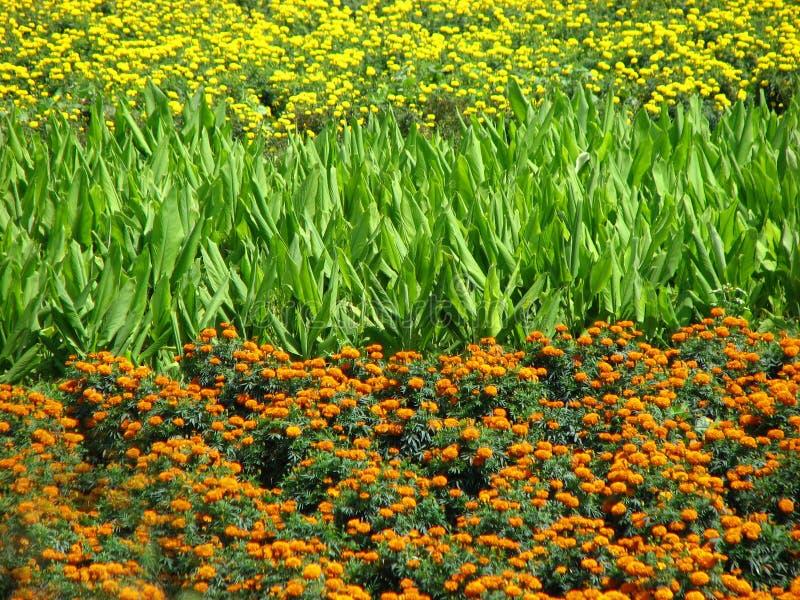 поле цветов стоковое фото