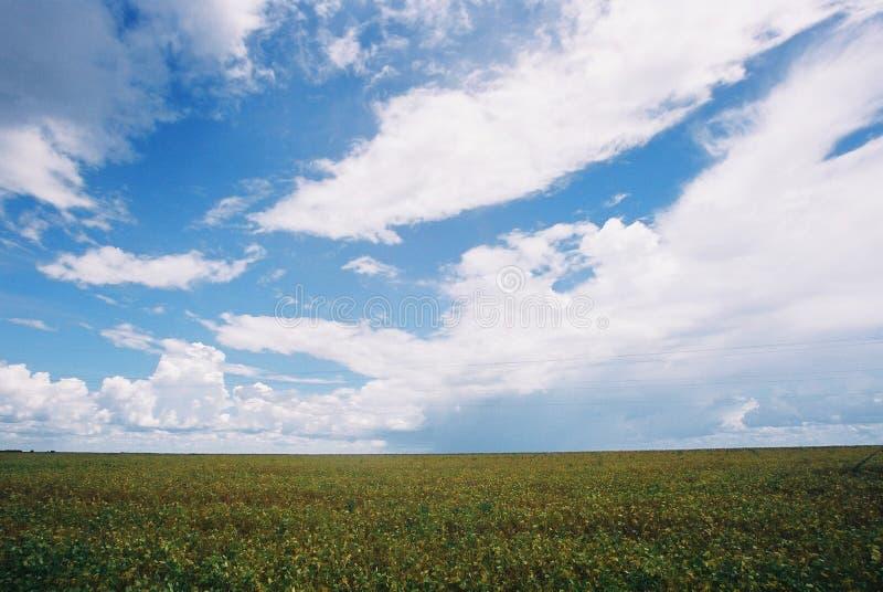 поле стоковое изображение