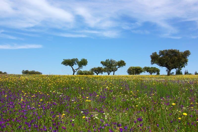 поле alentejo покрашенное стоковая фотография rf