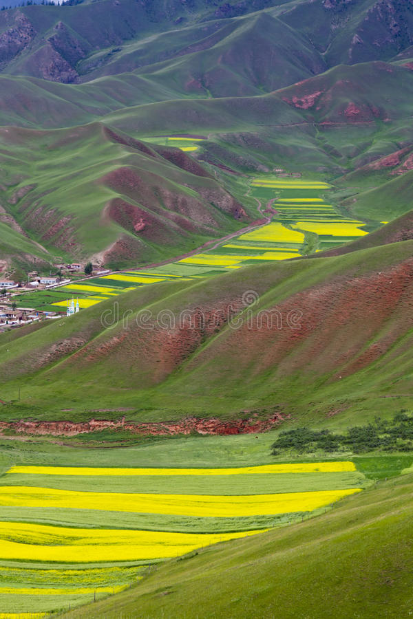 Поле Oilseed Terraced стоковое фото