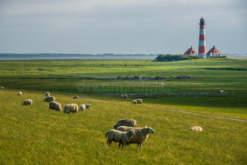 Поле Sankt Питер Ording овец westerhever маяка стоковое изображение rf