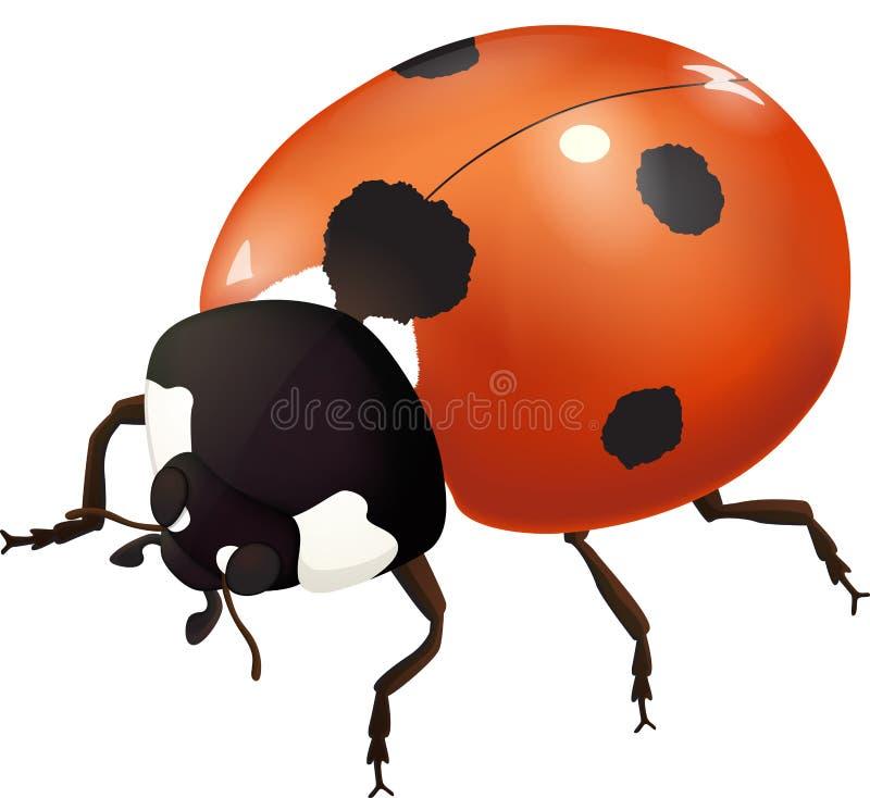 Ползания ladybug на деле иллюстрация вектора