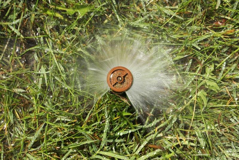полив травы сада стоковые изображения rf
