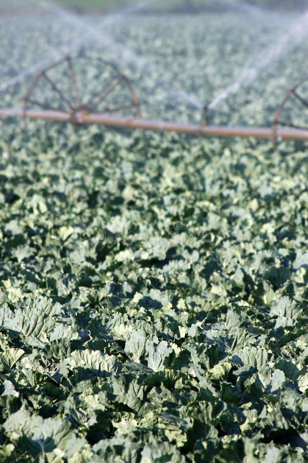полив стоковое изображение rf