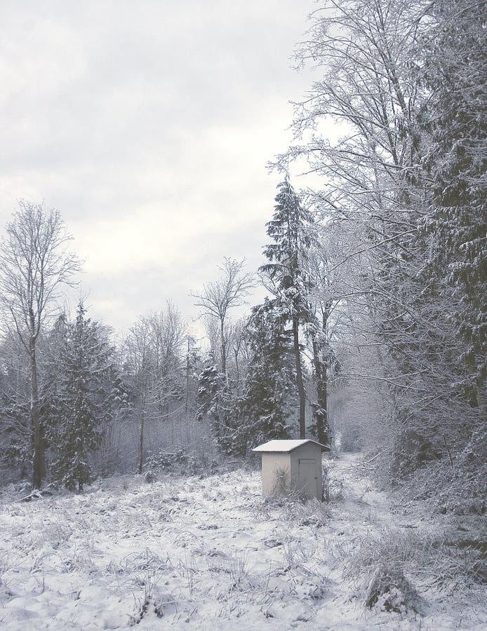 полиняйте зиму стоковые фотографии rf