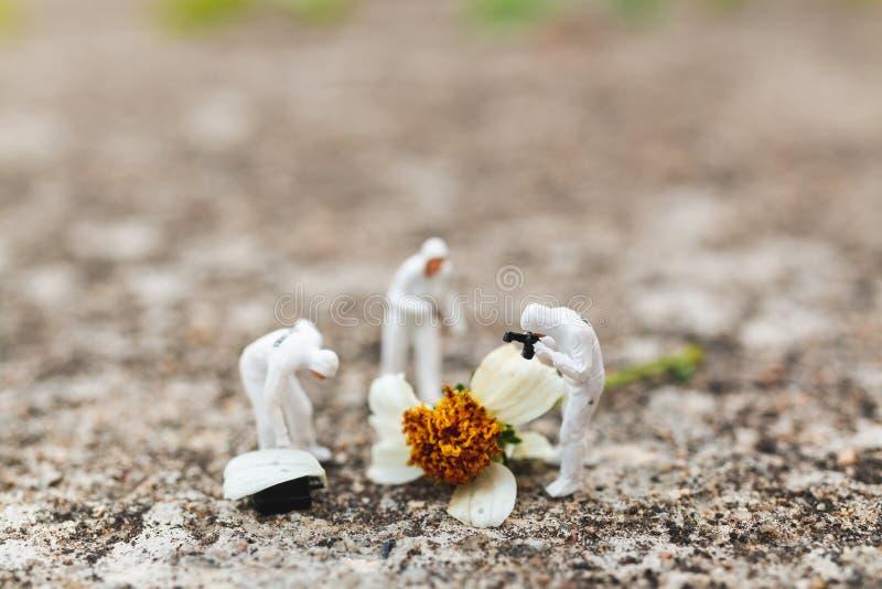 Полиция и сыщик находя доказательство от цветка в месте преступления стоковое фото rf