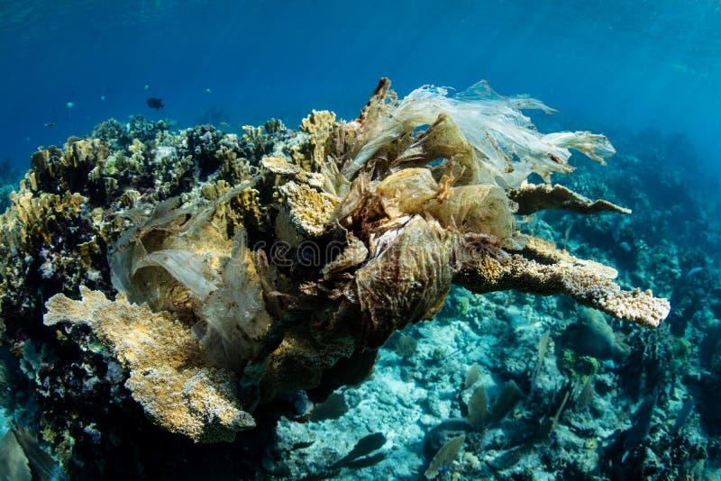 Полиэтиленовый пакет убивая колонию коралла Elkhorn в Вест-Инди стоковое изображение